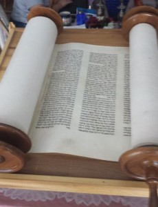 Torah Shiffman Compress